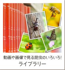 動画や画像で見る昆虫のいろいろ!ライブラリー