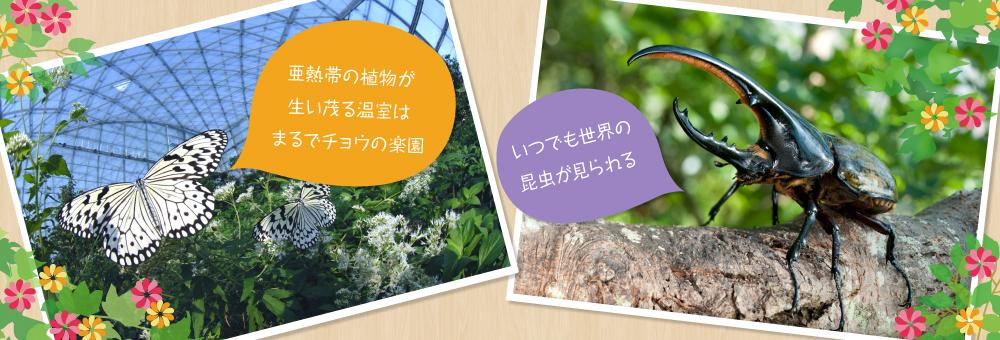 チョウの楽園・世界の昆虫