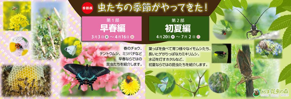 季節展「虫たちの季節がやってきた!」