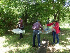 棒で葉をたたき、傘で虫をキャッチ(ビーティング)狙いはもちろんカメムシ!